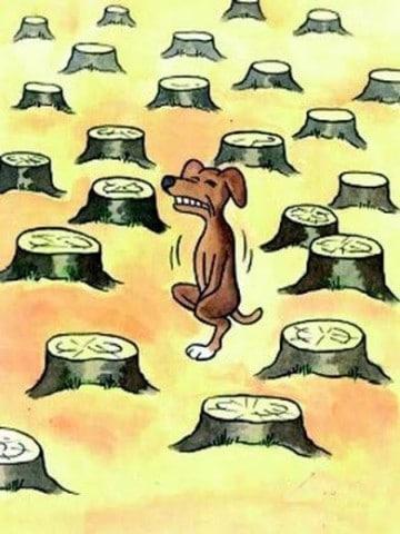 dibujos de la deforestacion reforestacion