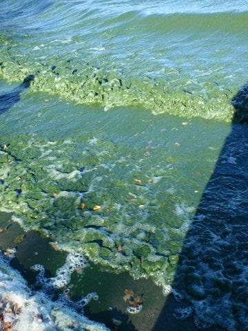 fotos de agua contaminada mexico