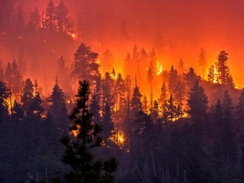 fotos de incendios forestales en españa