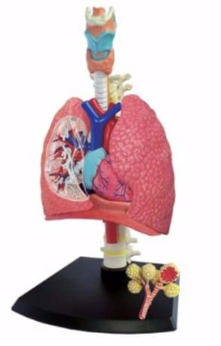 maquetas con material reciclado sistema respiratorio