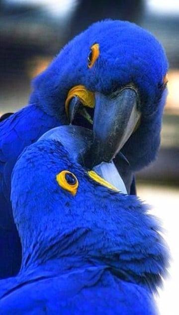 animales de la selva tropical en peligro de extincion