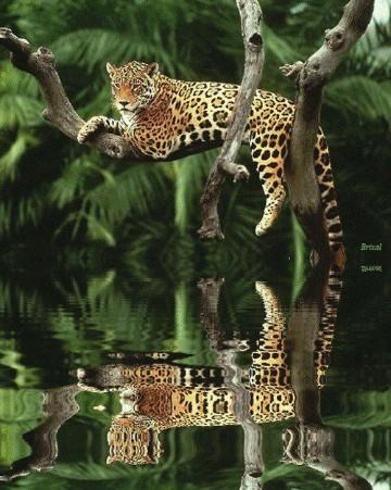 animales de la selva tropical humeda