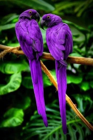 animales exoticos del mundo con sus nombres