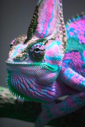 animales exoticos del mundo imagenes