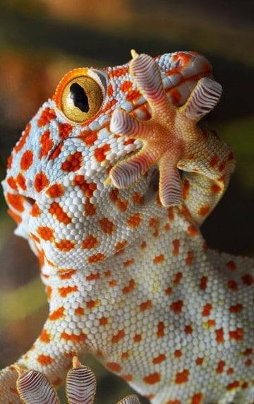 animales exoticos del mundo raros