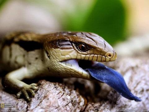 animales exoticos en mexico legales
