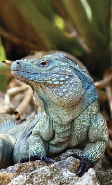 especies de animales en peligro de extincion informacion
