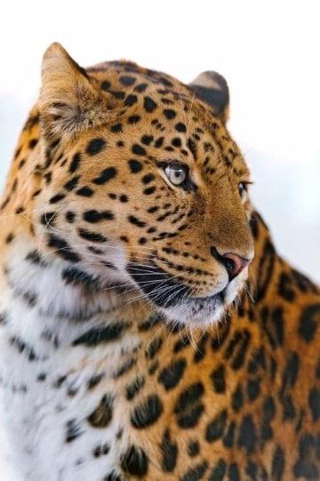 fauna de alta montaña caracteristicas