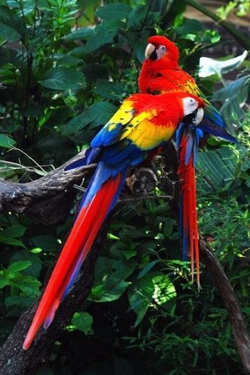 imagenes de la selva amazonica con animales