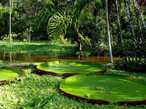 imagenes de la selva amazonica del peru