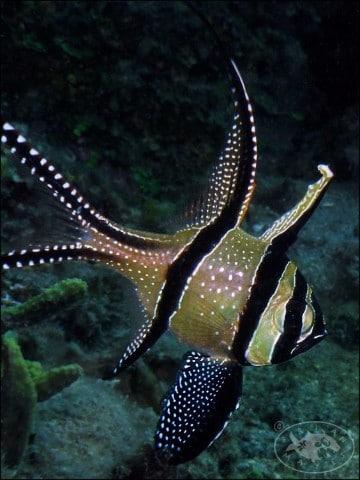 peces en peligro de extincion en el mar