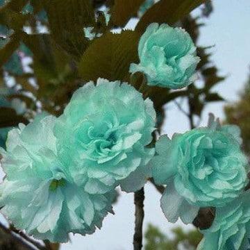 plantas ornamentales de interior grandes