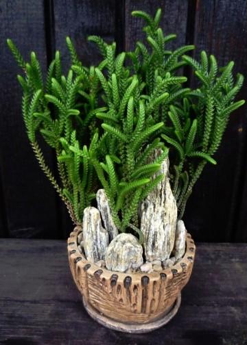 Bellas plantas ornamentales de interior con y sin luz for Plantas ornamentales de exterior