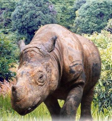 5 especies en peligro de extincion en america
