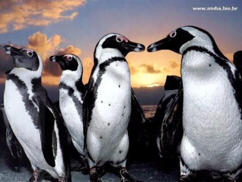 5 especies en peligro de extincion en el mundo