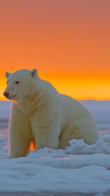 5 especies en peligro de extincion y sus causas