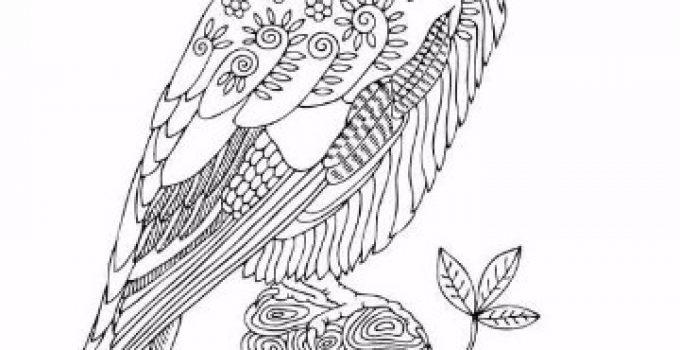 dibujos de aves volando  Imagenes del Medio Ambiente