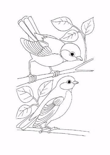 animales que vuelan para- olorear faciles