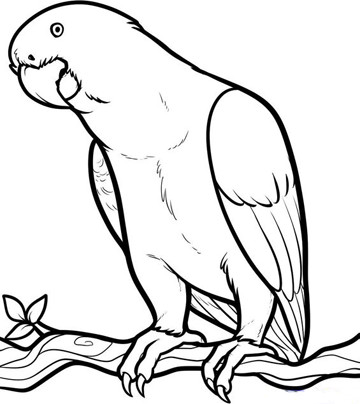 animales que vuelan para colorear para niños