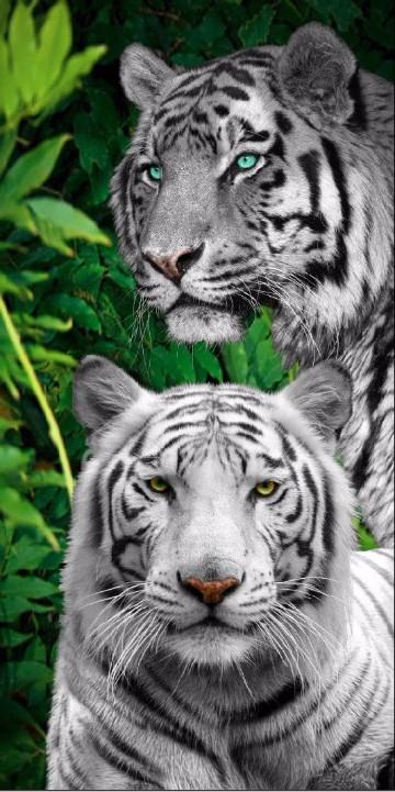 fotos de animales de la selva africana