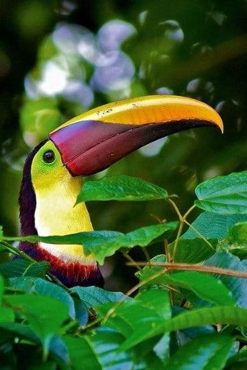 fotos de animales de la selva peruana