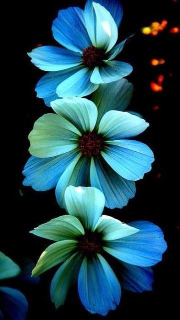 fotos de flores azules gratis