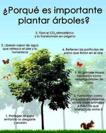frases para cuidar las plantas motivadoras