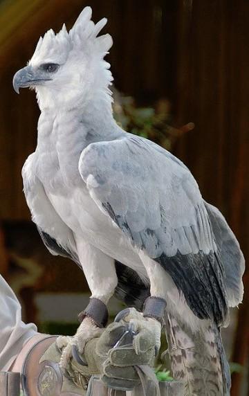 imagenes de animales aereos hermosos
