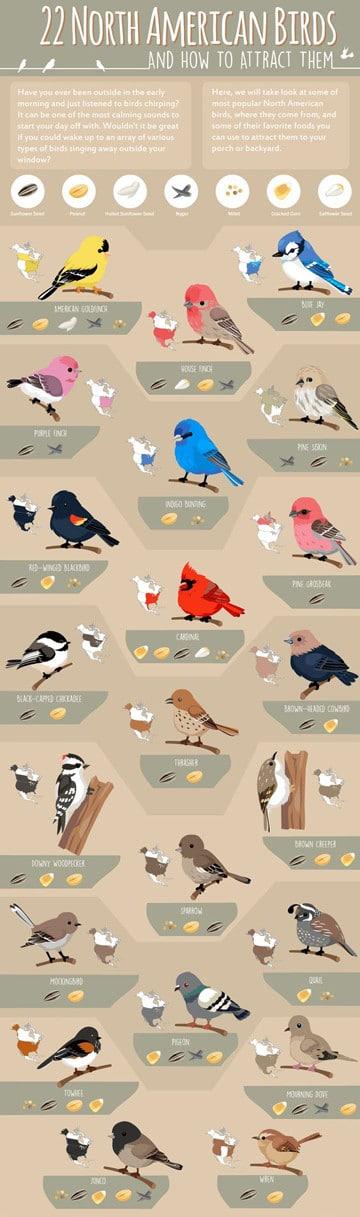 imagenes de animales aereos para niños