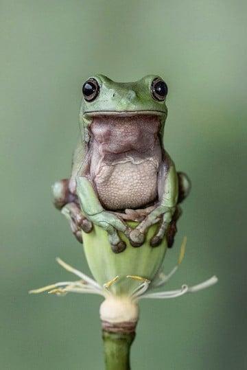 imagenes de animales anfibios para dibujar