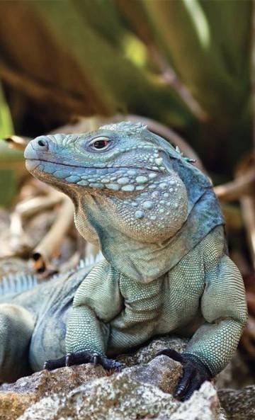 imagenes de animales reptiles ejemplos
