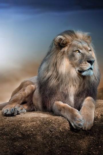 imagenes de animales salvajes de africa gratis