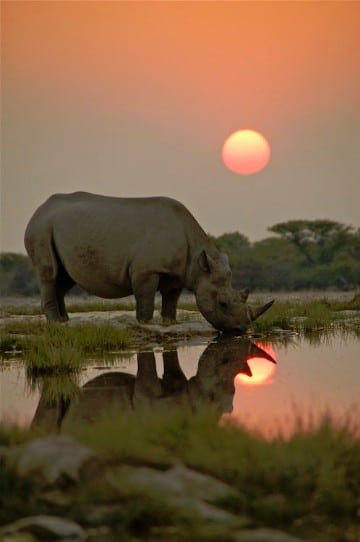 imagenes de animales salvajes de africa para fondo de pantalla