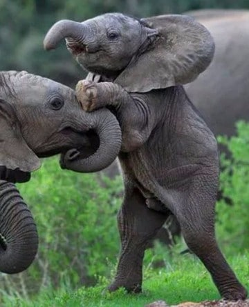 imagenes de animales salvajes de africa para imprimir