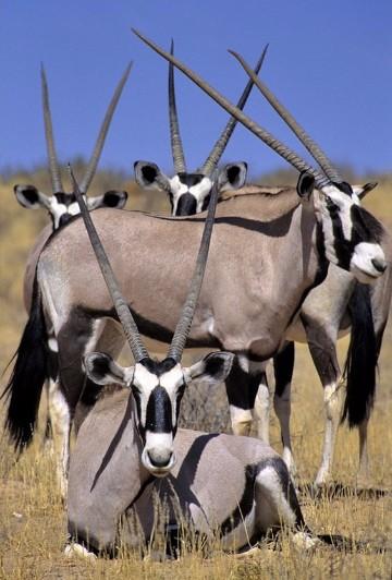imagenes de animales salvajes de africa y del mundo