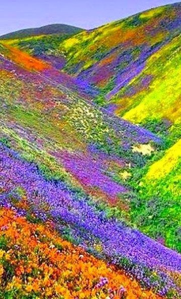 imagenes de campos de flores de colores