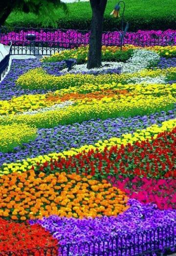 imagenes de campos de flores gratis