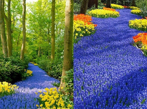 imagenes de campos de flores silvestres