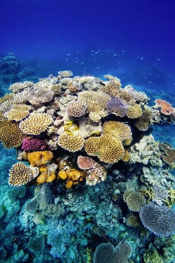 imagenes de corales marinos y arrecifes