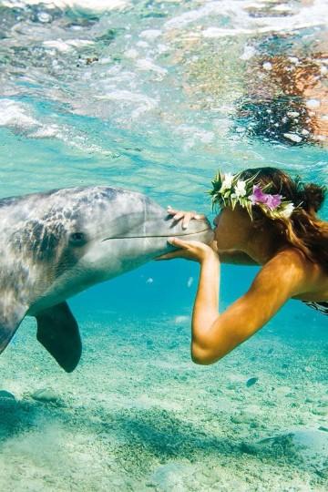 imagenes de delfines en el mar enamorados