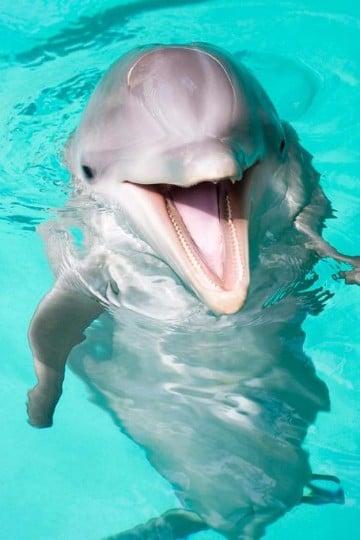 imagenes de delfines en el mar para imprimir