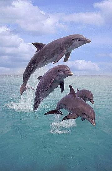 imagenes de delfines en el mar saltando