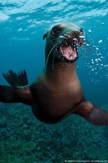 imagenes de lobos marinos de galapagos