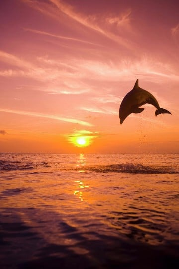 imagenes de puestas de sol en el mar