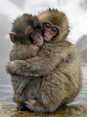 fotos de monos bebes imagenes