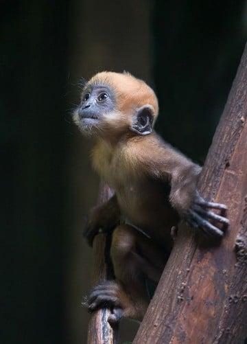 fotos de monos bebes para descargar