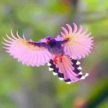 fotos de pajaros de colores volando