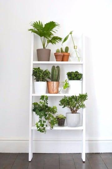 Fotos de plantas de interior exterior y de jardin imagenes del medio ambiente - Plantas de jardin exterior ...