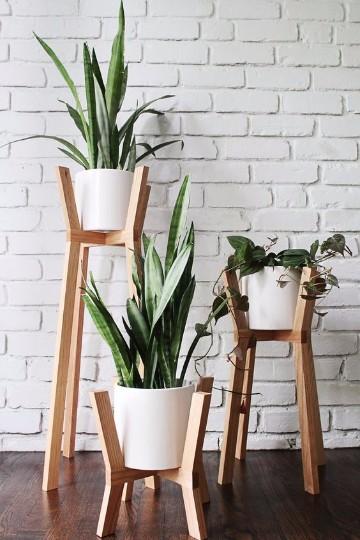 fotos de plantas de interior sin flores