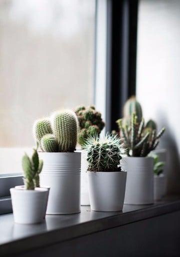 fotos de plantas de interior y sus cuidados